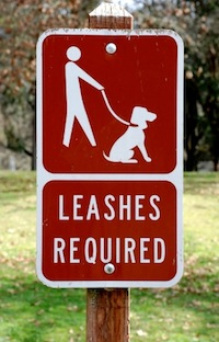 Leashes Required